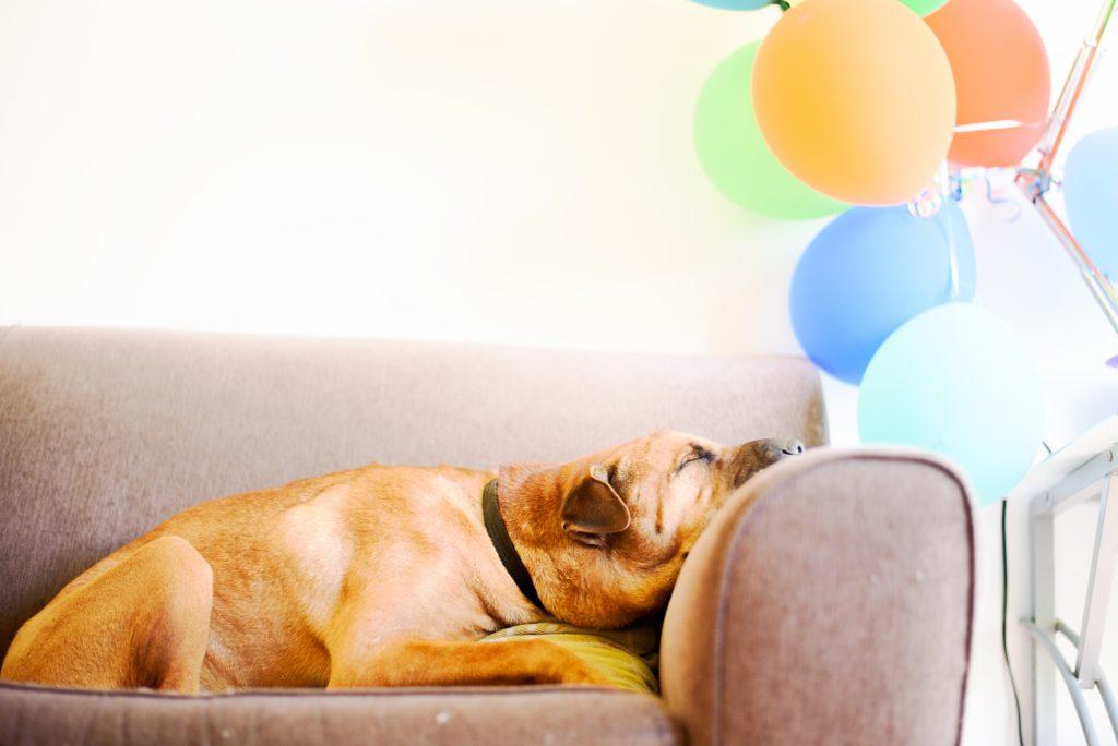 Perro aburrido y relajado